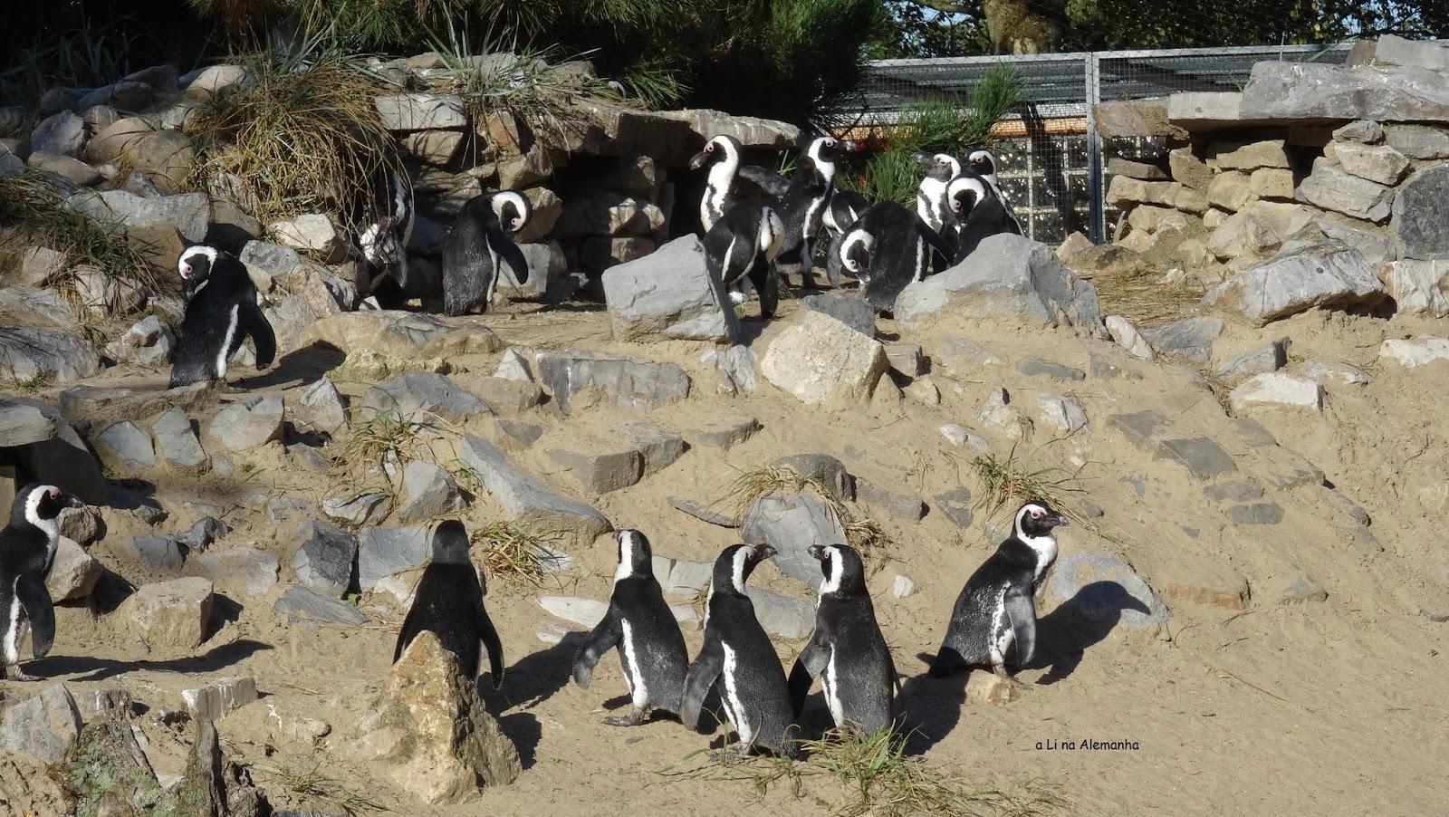 Zoológico em Aachen