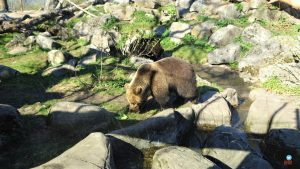 Zoológico de Skansen