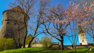 Atrações que valem a pena conhecer em Tallinn