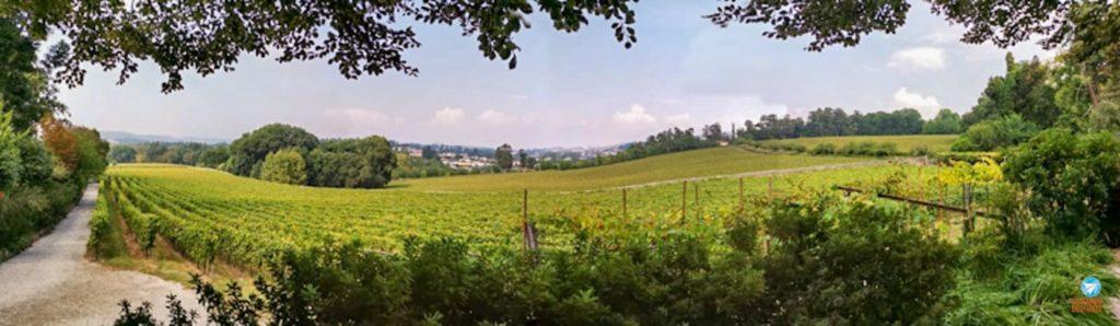 vinhas da Quinta da Aveleda em Portugal