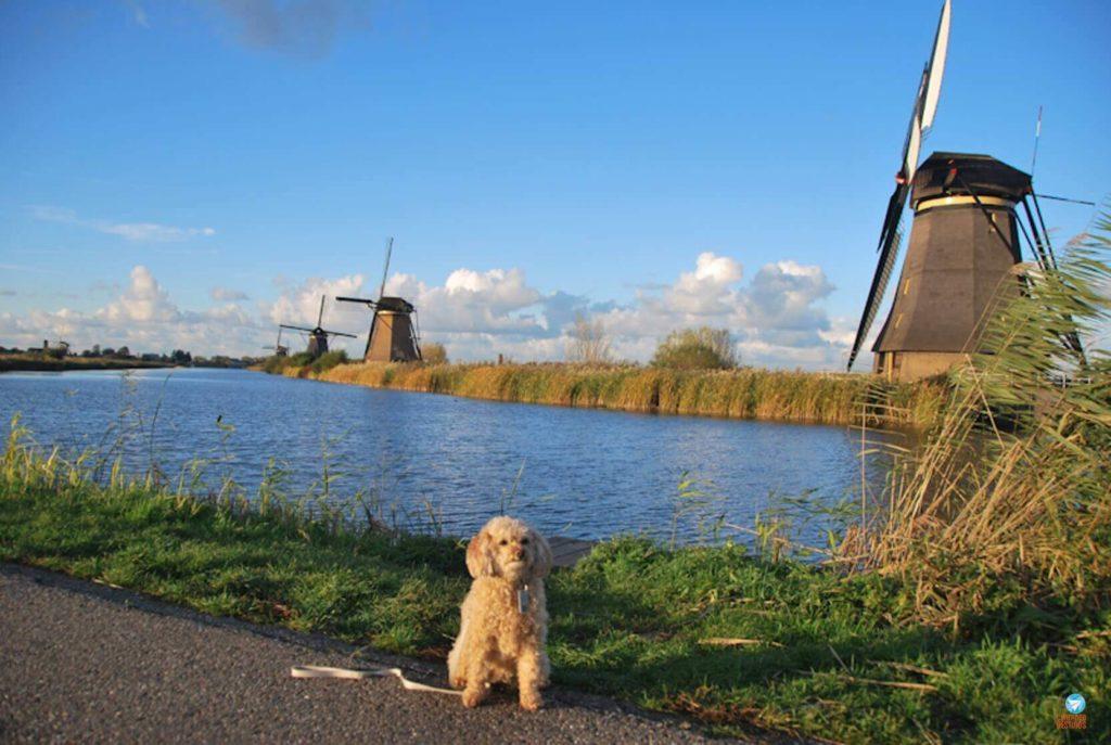 O que fazer em Haia - Amélie na Holanda