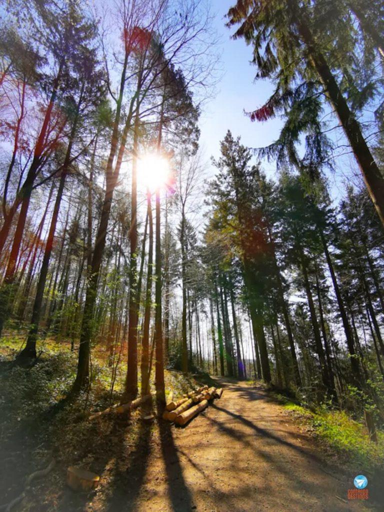 Floresta na rota idílica